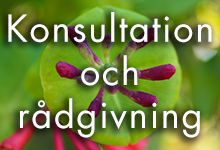 konsultation-radgivning-start